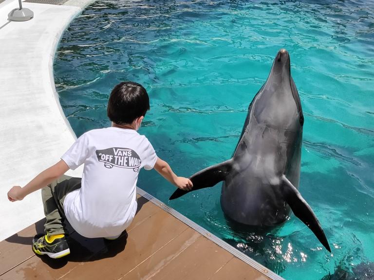 【アドベンチャーワールド】イルカと握手ができるふれあい体験【ドルフィンフィーディング】